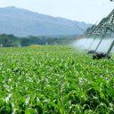 ethanol, biomassa, brandstof