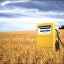 biobrandstof, tanken, koolzaad