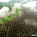 platgebrand bos, palmolie